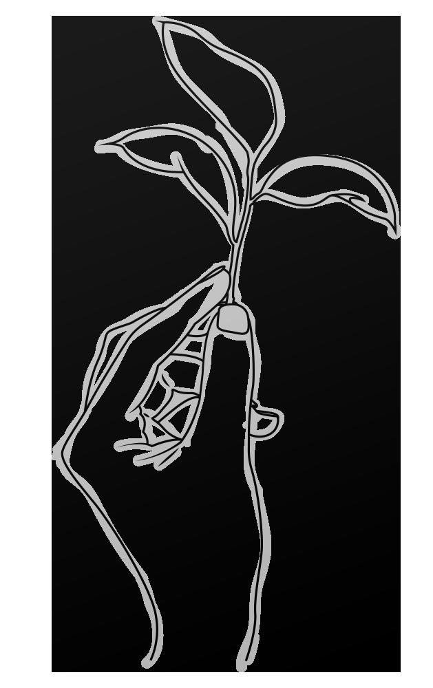 Skizze eines Blattes, welches in der Hand behutsam hochgehalten wird - Uwmelt