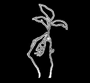 Skizze von einem Halm mit 3 Blättern, die in eine Hand nach oben gehalten werden - Umwelt